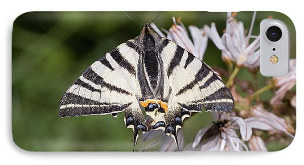 Scarce Swallowtail On White Asphodel IPhone Case by Bob Gibbons