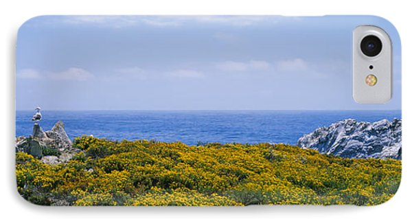 Sea Gulls Perching On Rocks, Point IPhone Case by Panoramic Images