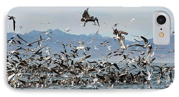 Seabirds Feeding IPhone 7 Case by Christopher Swann