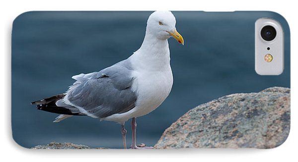 Seagull IPhone Case by Sebastian Musial