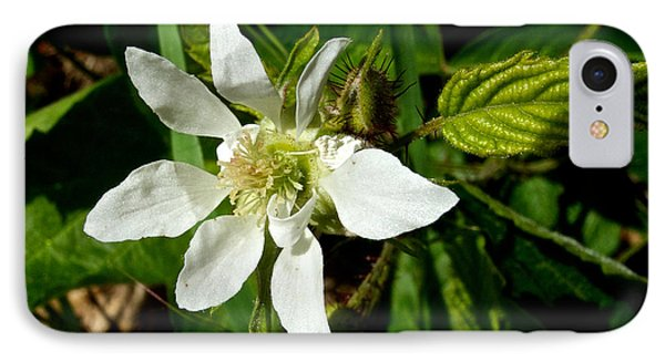 Serviceberry In Park Sierra-ca IPhone Case by Ruth Hager