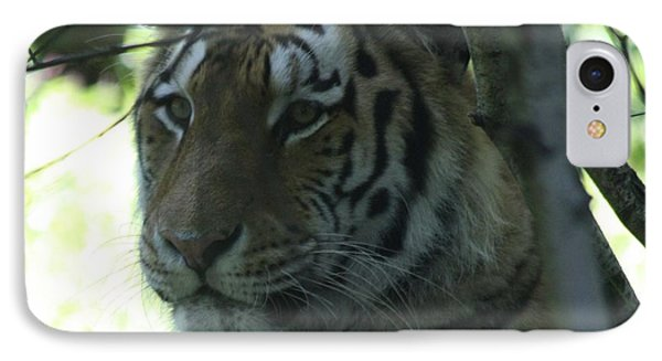 Siberian Tiger Profile IPhone Case by John Telfer