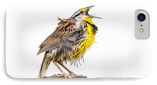 Singing Meadowlark 3rd Of 3 IPhone Case by Bill Swindaman