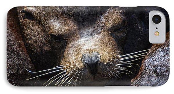 Sleepyhead Sea Lion IPhone Case by Mark Kiver