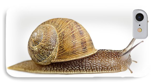 Snail IPhone Case by Elena Elisseeva