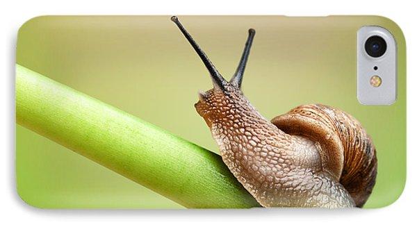Snail On Green Stem IPhone Case by Johan Swanepoel