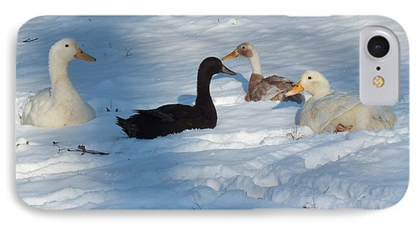Snow Ducks IPhone Case by Kimmary I MacLean