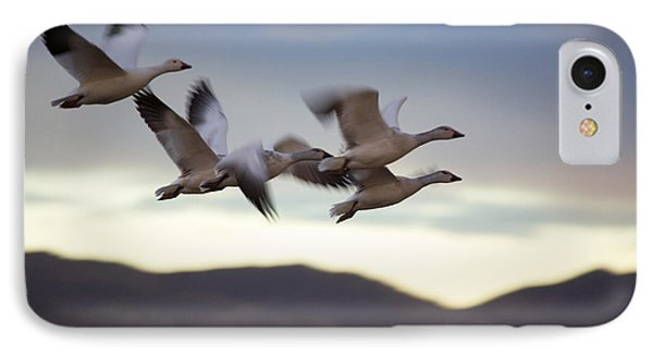 Snow Geese In Flight IPhone Case by Panoramic Images