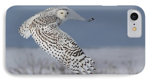 Snowy In Action Phone Case by Mircea Costina Photography
