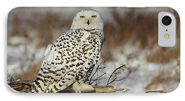 Snowy Owl At Sunset Phone Case by Inspired Nature Photography Fine Art Photography