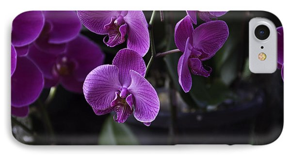 Some Very Beautiful Purple Colored Orchid Flowers Inside The Jurong Bird Park Phone Case by Ashish Agarwal