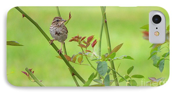 Song Sparrow Phone Case by Rima Biswas