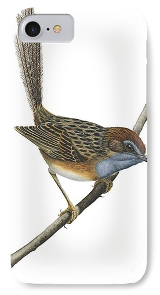 Southern Emu Wren IPhone Case by Anonymous