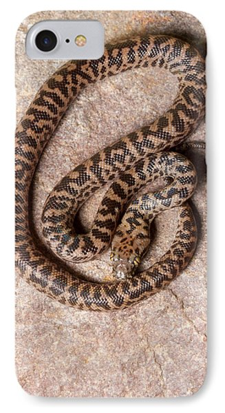 IPhone Case featuring the photograph Spotted Python Antaresia Maculosa Top by David Kenny