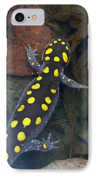 Spotted Salamander IPhone 7 Case by Christina Rollo