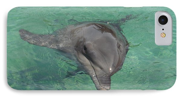 Starlett Dolphin  IPhone Case by Mary J Tait