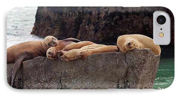 Steller Sea Lions IPhone Case by Jim West