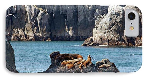Steller Sea Lions On Coastal Rocks IPhone Case by Jim West