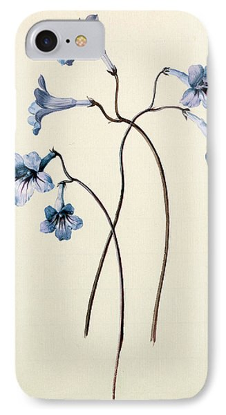 Streptocarpus IPhone Case by German School
