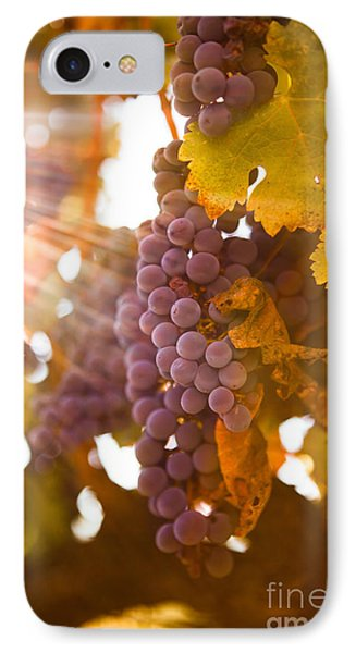 Sun Ripened Grapes Phone Case by Diane Diederich