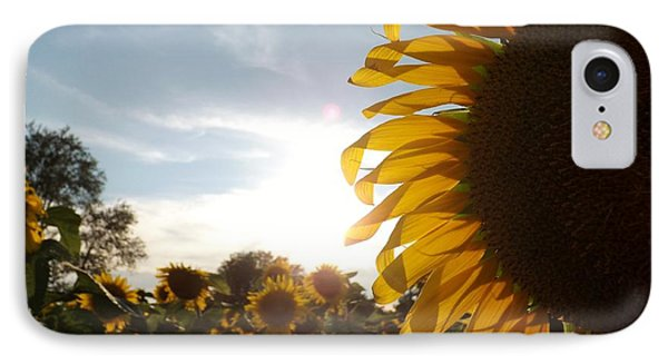 Sunflower IPhone Case by Ashley Thompson