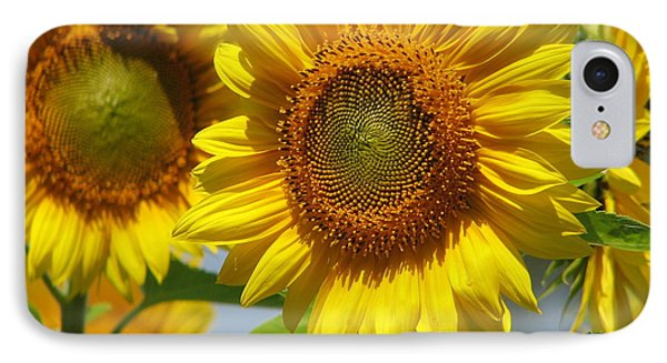 Sunflower Closeup IPhone Case by Tammie Miller