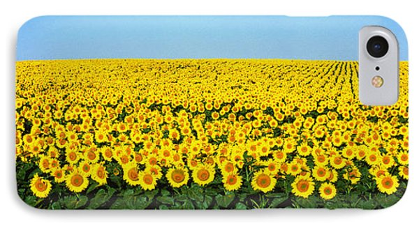 Sunflower Field, North Dakota, Usa IPhone Case by Panoramic Images