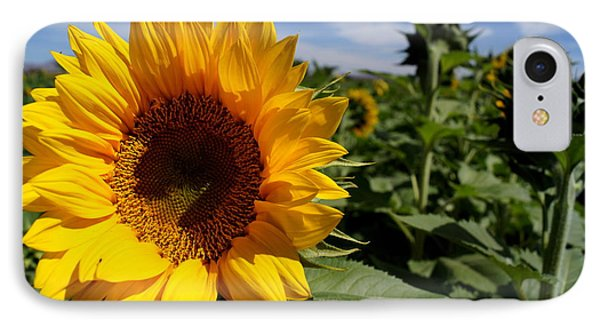 Sunflower Glow Phone Case by Kerri Mortenson