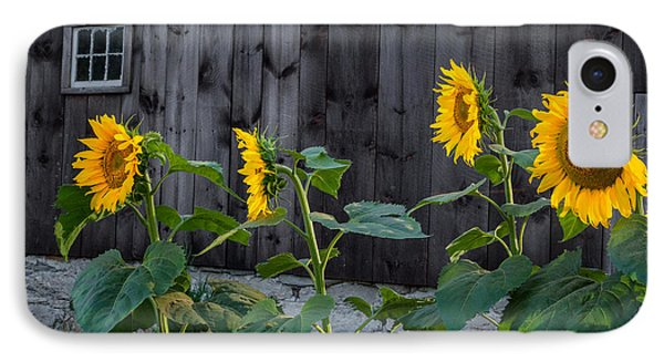 Sunflower Quartet IPhone Case by Bill Wakeley
