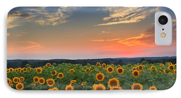 Sunflowers In The Evening IPhone Case by Bill Wakeley
