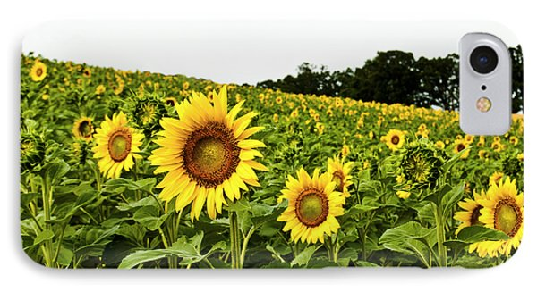 Sunflowers On A Hill IPhone Case by Christi Kraft