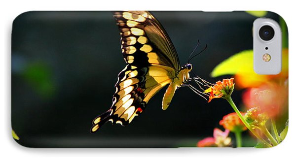 Sunlit Giant Swallowtail Butterfly IPhone Case by Reid Callaway
