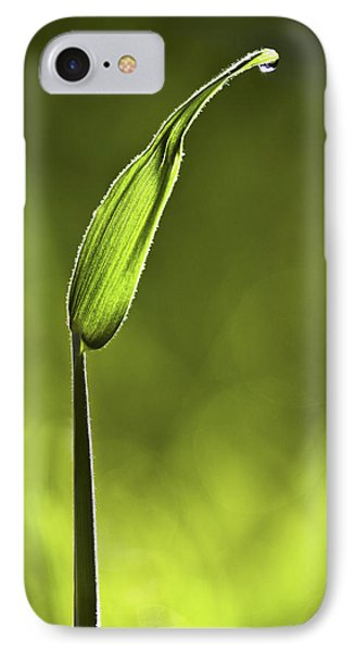 Sunlit Grass And Dew Drop IPhone Case by Natalie Kinnear