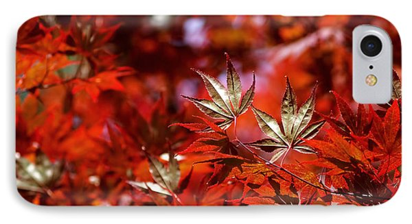 Sunlit Japanese Maple IPhone Case by Rona Black