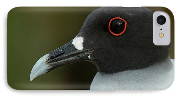 Swallow-tailed Gull (larus Furcatus IPhone Case by Pete Oxford