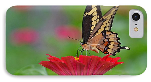 IPhone Case featuring the photograph Swallowtail On A Zinnia by Rodney Campbell