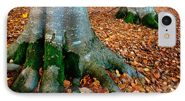 Swedish Beech Forest IPhone Case by Inge Johnsson