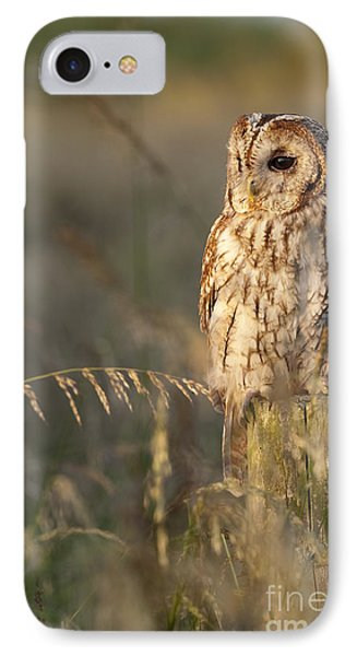 Tawny Owl IPhone 7 Case by Tim Gainey