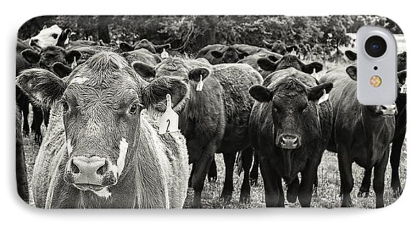 Tennessee Cattle IPhone Case by Jon Woodhams