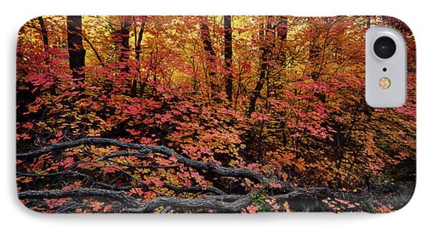 The Beauty Of Autumn  IPhone Case by Saija  Lehtonen