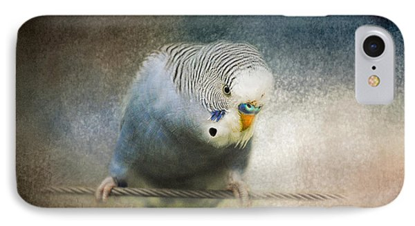 The Budgie Collection - Budgie 3 IPhone Case by Jai Johnson
