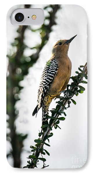 The Gila  Woodpecker IPhone Case by Robert Bales