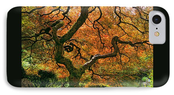 The Japanese Maple IPhone Case by Timm Chapman