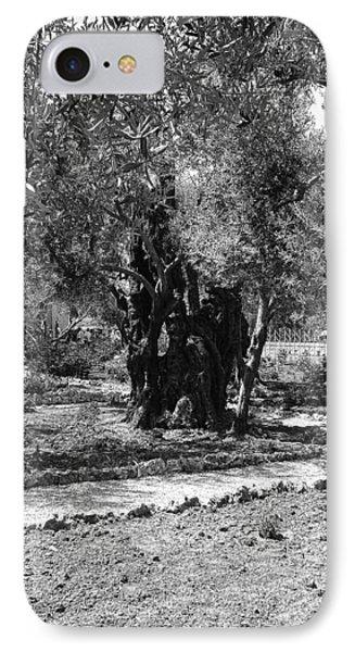 The Olive Tree At Gethsemane Phone Case by Sandra Pena de Ortiz