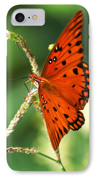 The Passion Butterfly Phone Case by Kim Pate