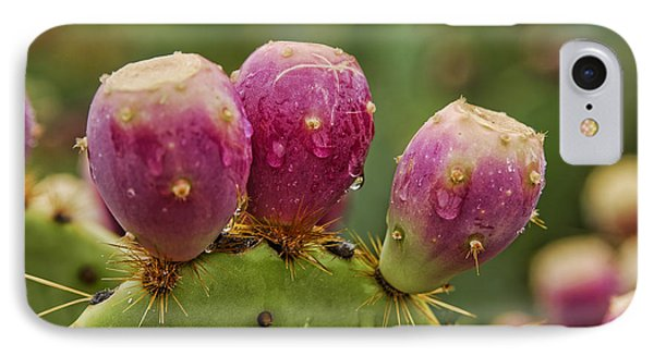 The Prickly Pear  Phone Case by Saija  Lehtonen