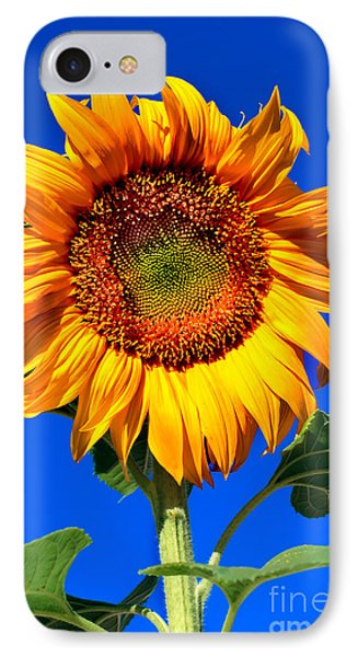 The Sunflower IPhone Case by Robert Bales