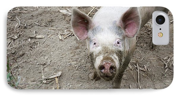 This Little Piggy IPhone Case by Edward Fielding