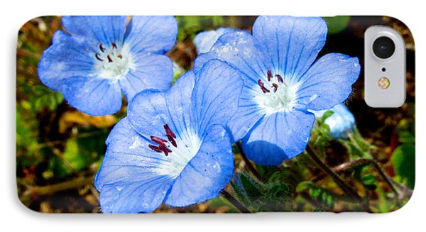Three Baby Blue Eyes In Park Sierra-ca IPhone Case by Ruth Hager