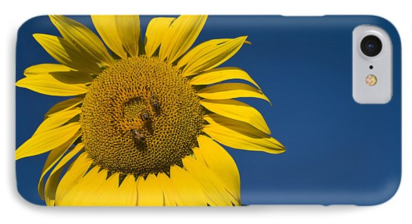 Three Bees And A Sunflower Phone Case by Adam Romanowicz